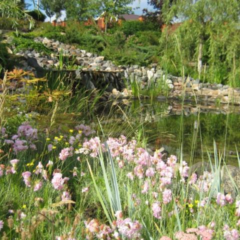 Многолетний цветник у водоема, береговая линия