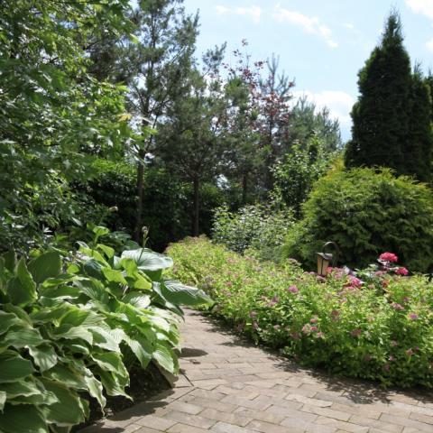 Озеленение. Многолетние цветы
