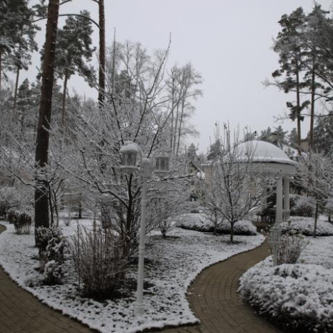 Плодовый сад, плодовые деревья, зима