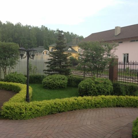 Регулярный сад, боскеты (садовые живые бордюры) из спиреи голден принцесс