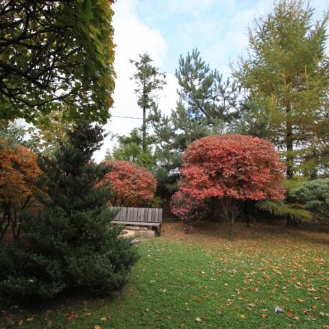 Осенняя композиция в саду