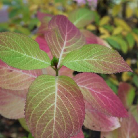 Радужные листья в осеннем саду