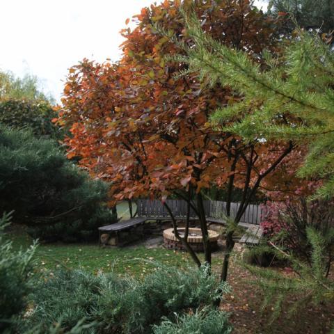 Нарядные деревья в саду