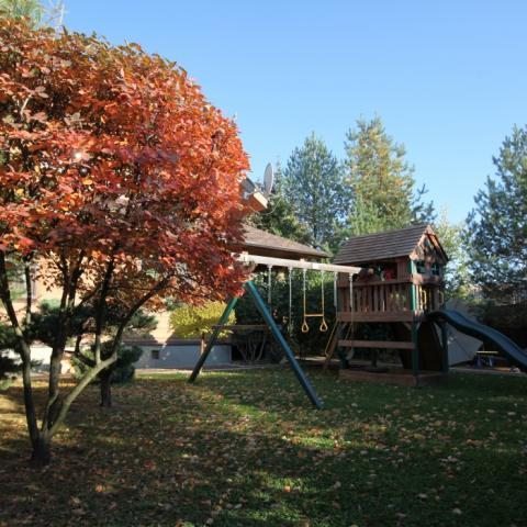 Осенняя красная ирга