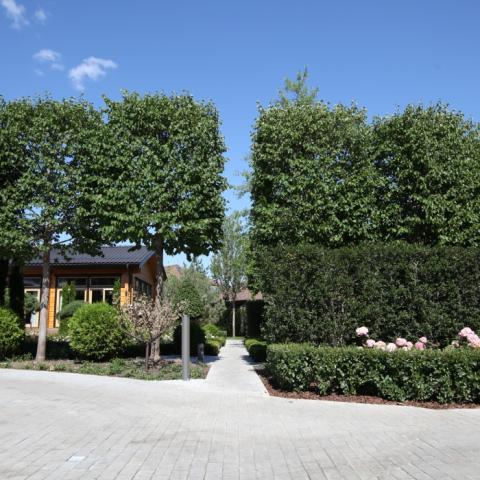Озеленение деревья крупномеры