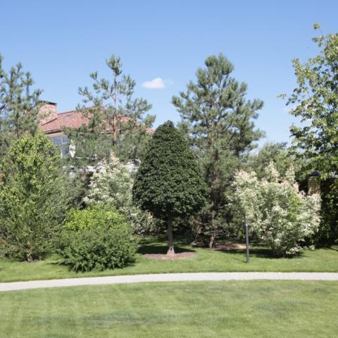 Крупные деревья и кустарники