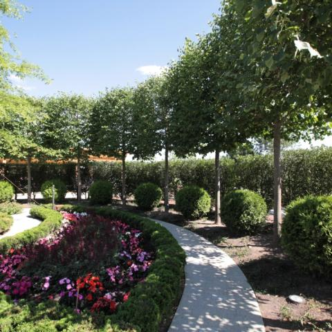 Озеленение в саду крупный план