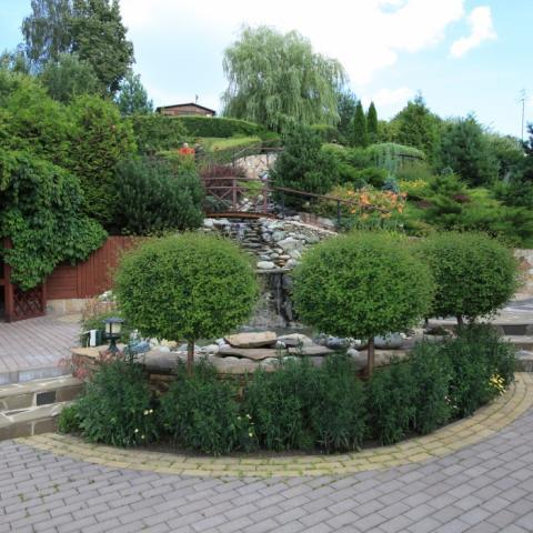 Сирень мейера на штамбе и садовые лестницы