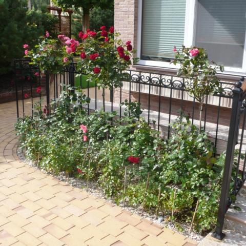 Площадка у дома с растениями
