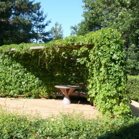 МАФ Пергола с девичьим виноградом. Малые архитектурные формы