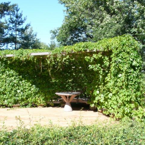 Пергольная конструкция с девичьим виноградом. Малые архитектурные формы