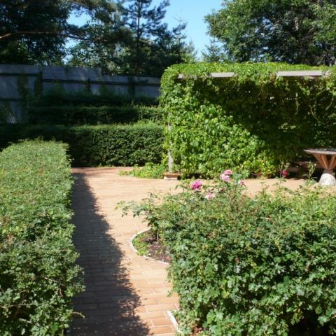 Живые стенки из боярышника однопестичного. Растения
