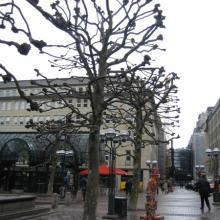 Крупномеры в городской застройке Гамбурга