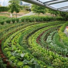 Дизайнерский огород от Садового Лабиринта