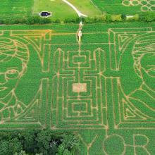 Зеленые лабиринты из кукурузы