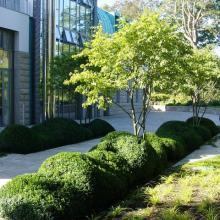 Сад в городском стиле