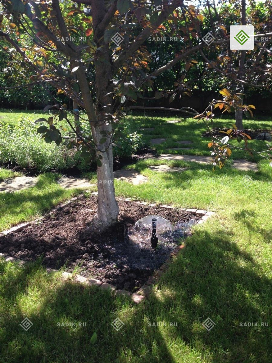 Спринклер системы автополива дерева