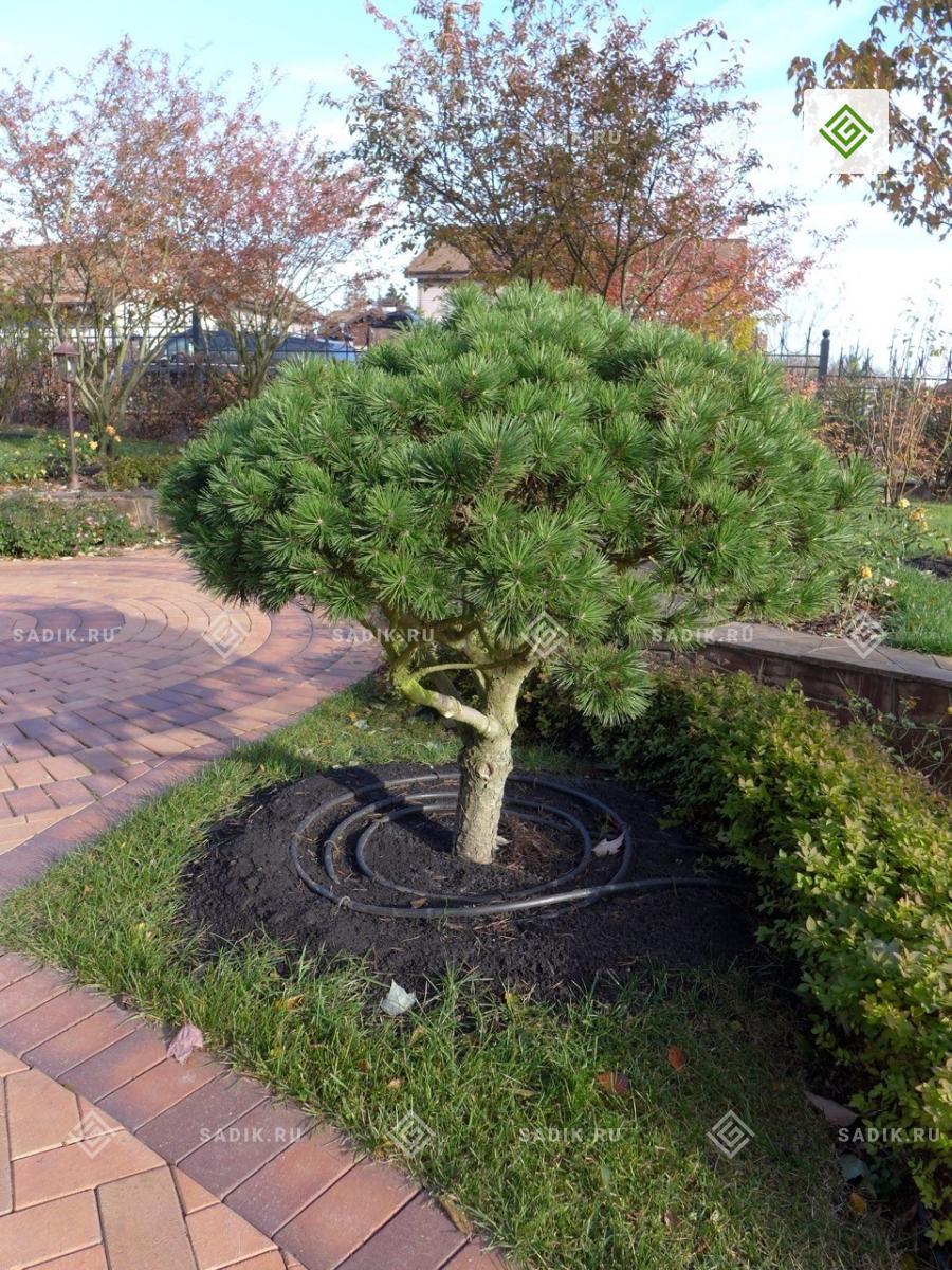 Прикорневой капельный автоматический полив растений