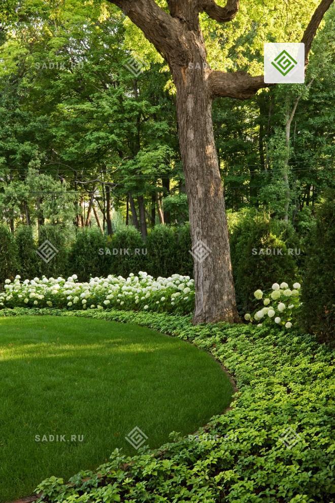 Лужайка с газоном из красного лугового клевера и трав с желтыми цветами