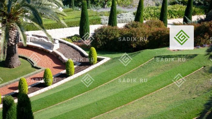 Такой бархатистый газон вырастить достаточно сложно и долго