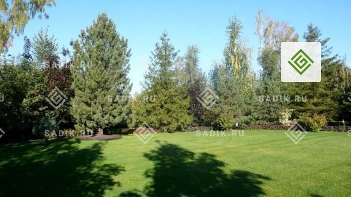 Газон в ландшафтном дизайне как способ озеленения больших поверхностей