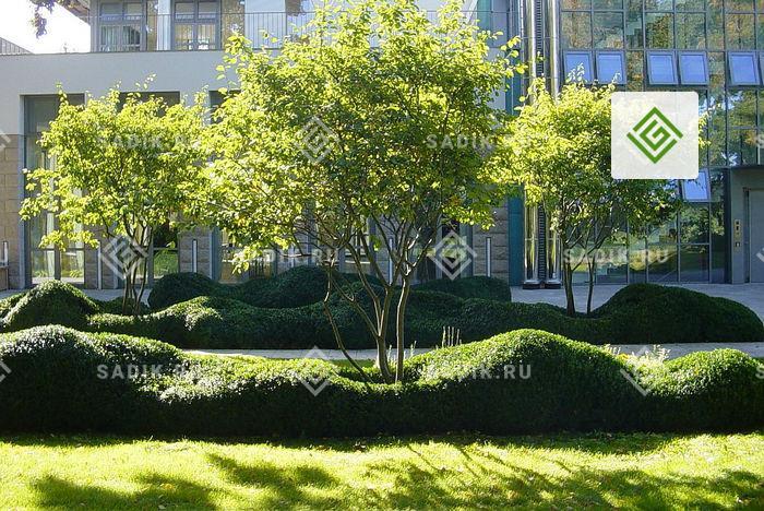 Крупномер у городского офисного здания
