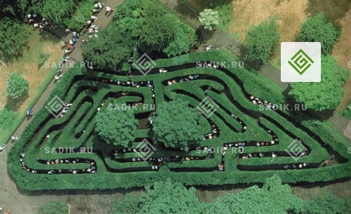 Знаменитый зеленый лабиринт Hampton Court Maze