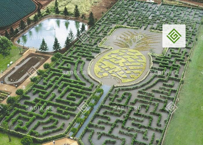Самый большой лабиринт в мире согласно Книге рекордов Гиннесса – ананасовый сад-лабиринт (Pineapple Garden Maze) на Гавайях занимает площадь более 2 Га