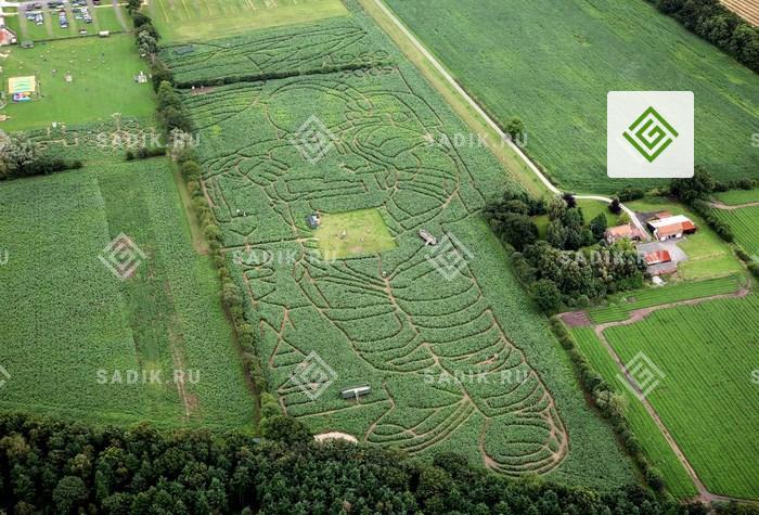 Меняющийся кукурузный лабиринт York Maze является самым крупным в Европе