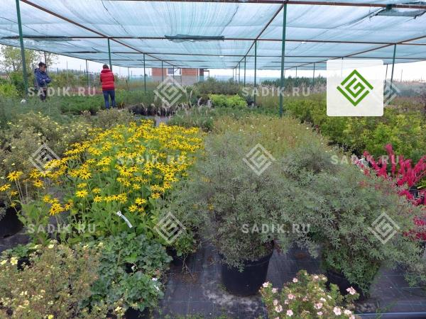 Новый садовый центр в Питомнике «Садовый Лабиринт» (Тула М-4 Дон)
