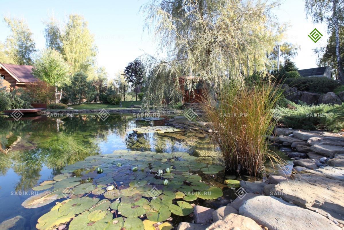 Пруд с кувшинками и другими водными растениями