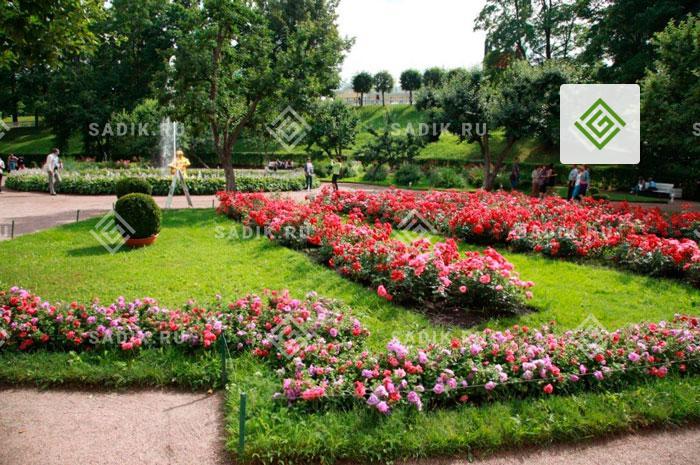 Розарий разбит на большой площади в городском парке