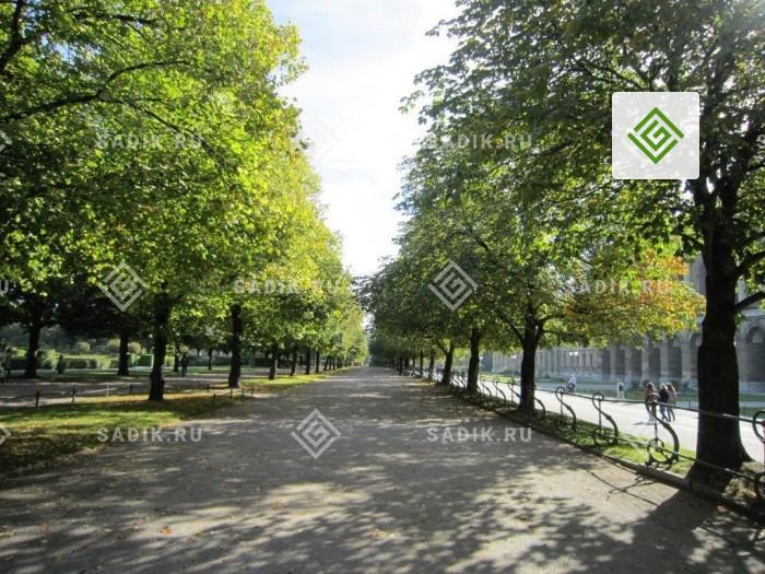Крупномеры в городском парке