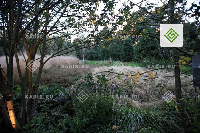 Бурно цветущие декоративные злаки в одном из европейских парков